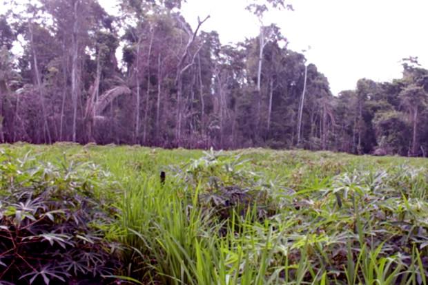 [Reportajes ANF] Voces de la Amazonía: Cambio climático, sus efectos y las acciones para enfrentarlo